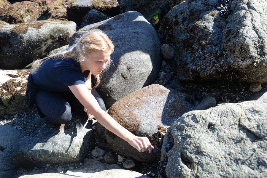 AP Environmental Science Assists Ocean Institute