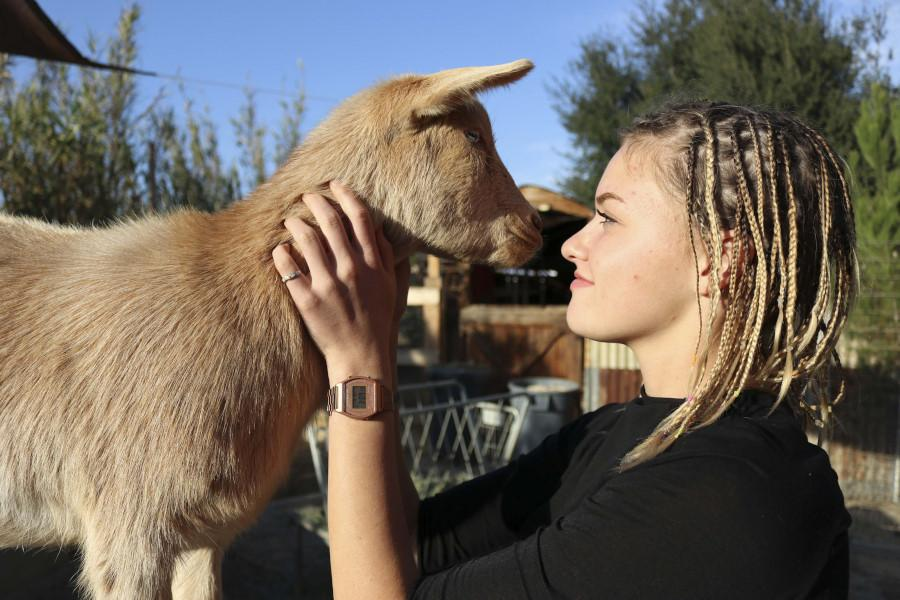 Grace Jones, a student at SJHHS and the owner of Grace's Goats and Soaps, is seen embracing one of the goats that inspired her business. The goats provide milk that helps Jones create natural and organic body products like soap bars, bath bombs, and more.