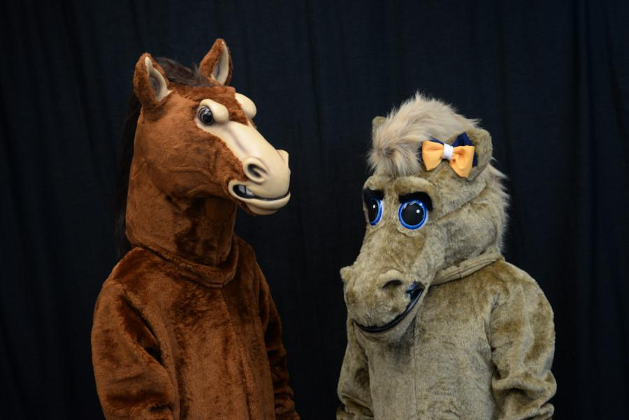 Stanley (left) stands with the new mascot (right). The two, along with Teddy (not pictured), debuted at last friday's football game. The two horses plan on creating routines to perform at school related events. Carson Marchello (Stanley) and Brianna Diiorio (Stella) were selected after a tryout in which they were taught two cheers and performed them. Photo by Lucy Law