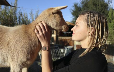 Grace Jones Starts Her Own Business: Goats and Co.