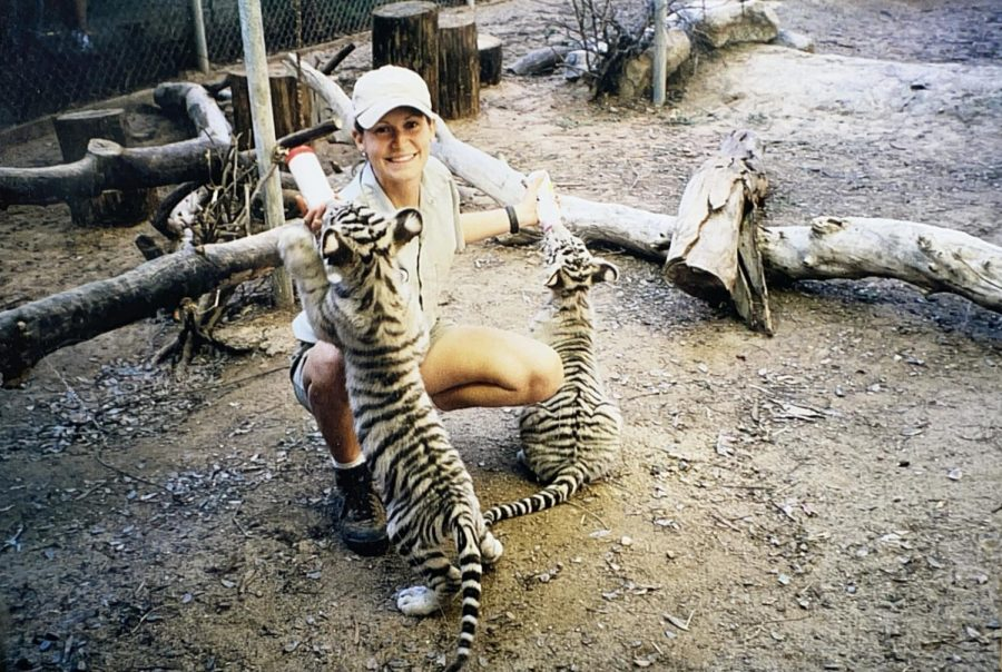 Erin Rickert, AP biology and anatomy/physiology teacher, bottle-feeds two white bengal tigers. When she worked as a zookeeper, Rickert would often hand-raise animals, including the baby tigers pictured.
